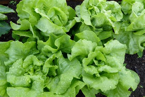 Free Images : green, produce, healthy, eat, vegetables