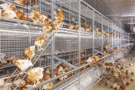 Cage Free Systems | Big Dutchman Inc | Poultry Production